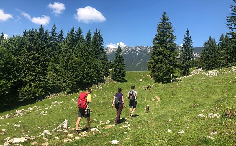 Hiking in the Wild Transylvania.