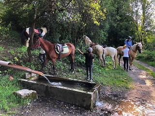 horses and riders refreshing at natural spring in the forest